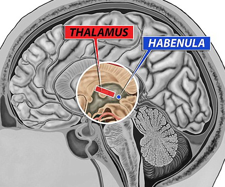The Role of the Habenula in Drug Addiction
